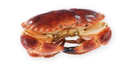 Le crabe est avec le saumon un des meilleurs aliments des mers en nutrition santé