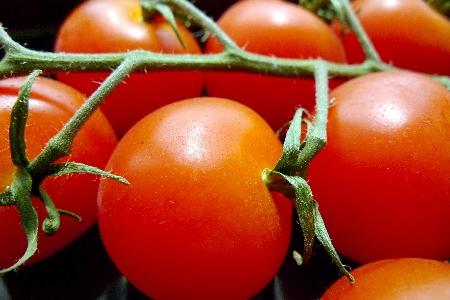 La tomate qui est un fruit et non pas un légume trouve sa place dans un programme de nutrition santé