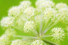 les plantes bio sont des artisans du drainage hépato-biliaire ou du drainage diurétique