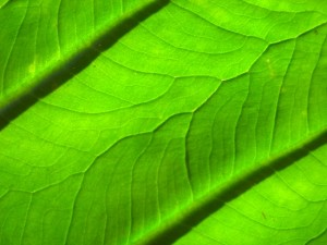 La phytothérapie est un traitement naturel et traditionnel en médecine et une alternative à la pharmacie chimique