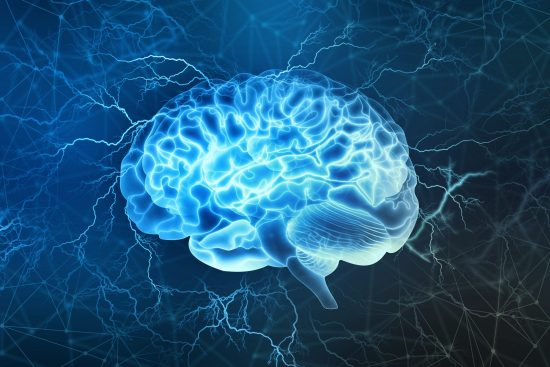 MBTI et cerveau